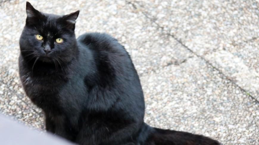 Мужчина обвинил в поджоге квартиры своего «кота-курильщика»