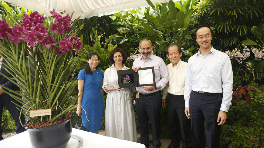 Новую сингапурскую орхидею назвали в честь Никола Пашиняна и Анны Акопян