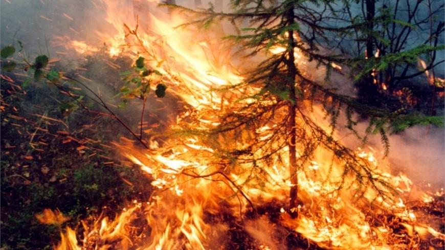 ООН: На Аляске и в Сибири за лето сгорели леса на площади в 100 тыс. футбольных полей