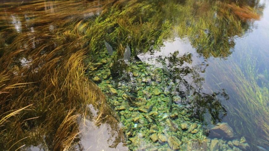 Вода отступает: реки в Иркутской области возвращаются в свои берега