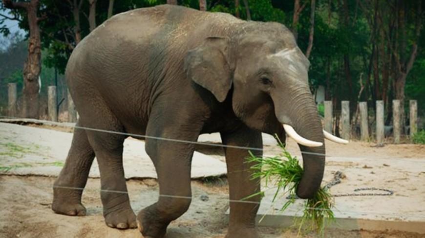 Из-за близости человека слоны вынуждены создавать мужские группы