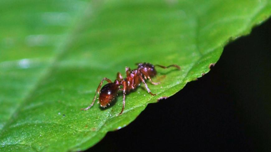 """Фото: Сергей Минеев (МТРК «Мир») """"«Мир 24»"""":http://mir24.tv/, муравей, животные, насекомые"""