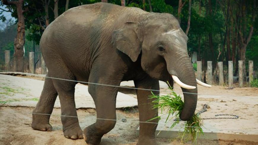 Выгуливающий слонов мужчина поразил жителей Якутска