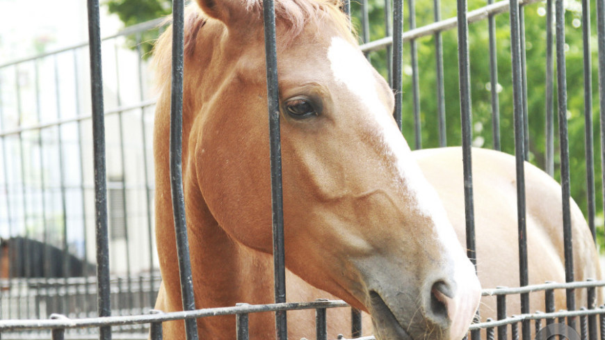 Себя показать, игру посмотреть: в России открыли сезон конного поло