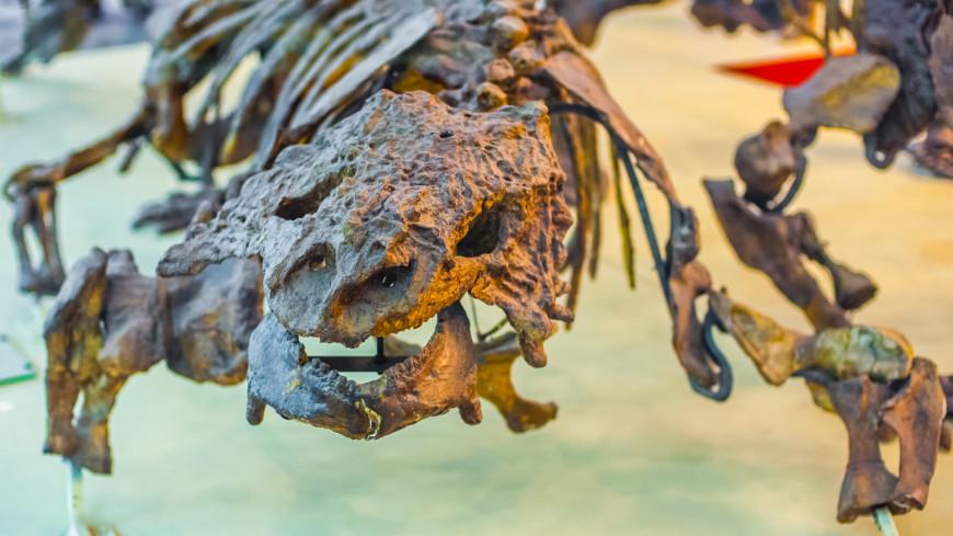 Неизвестную науке ящерицу обнаружили в желудке динозавра