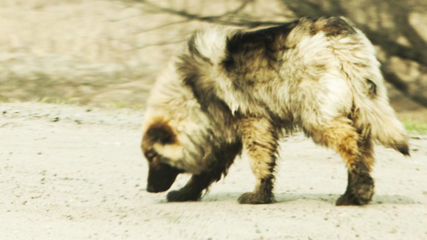 """Фото: Татьяна Константинова, """"«Мир24»"""":http://mir24.tv/, дворняга, собака"""