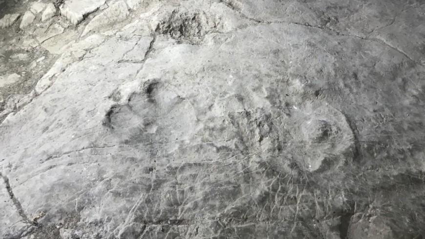 Следы динозавров возрастом 100 млн лет обнаружены в Китае