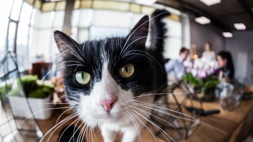 """Фото: Артем Куковский (МТРК «Мир») """"«Мир 24»"""":http://mir24.tv/, домашние животные, коты, котенок, кошка, кот, животные"""