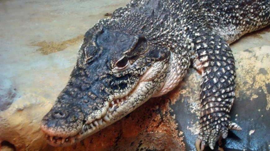 Найдены останки крокодила, который охотился на динозавров