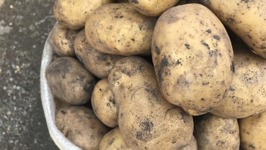 Картошка «перекрыла» движение на федеральной трассе М-4 «Дон»
