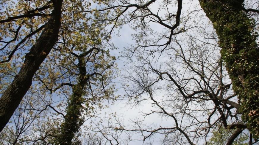 """Фото: Мария Чегляева, """"«МИР 24»"""":http://mir24.tv/, дерево, природа, погода, весна, цветы, деревья"""