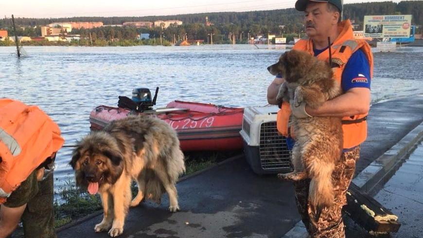 Сотрудники МЧС и волонтеры спасли более 100 животных в иркутском Тулуне
