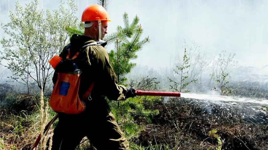 Под Самарой к тушению лесного пожара привлечены 155 человек