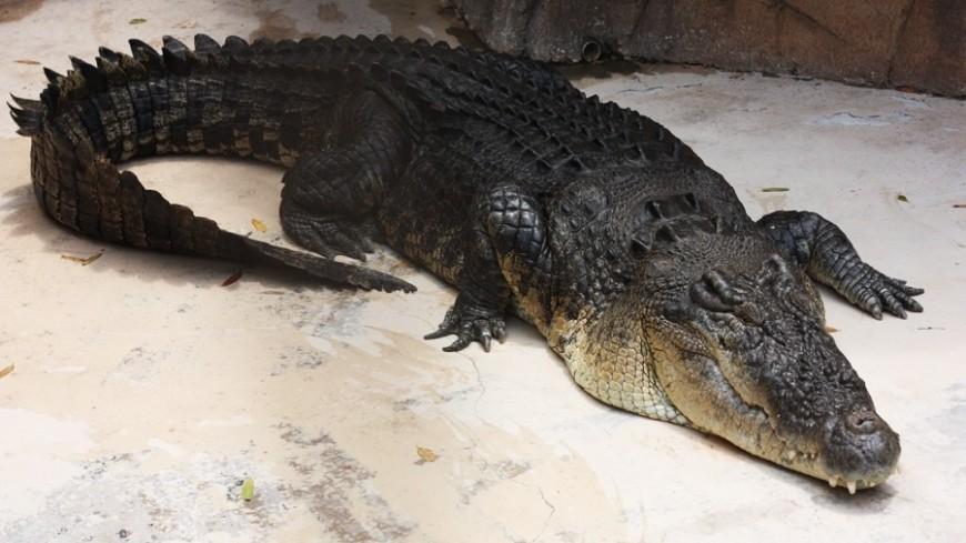 Древние крокодилы оказались вегетарианцами