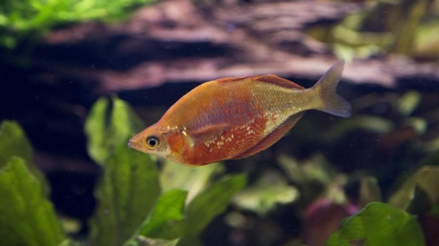Рыба. Морские жители Крокус Сити Океанариум.