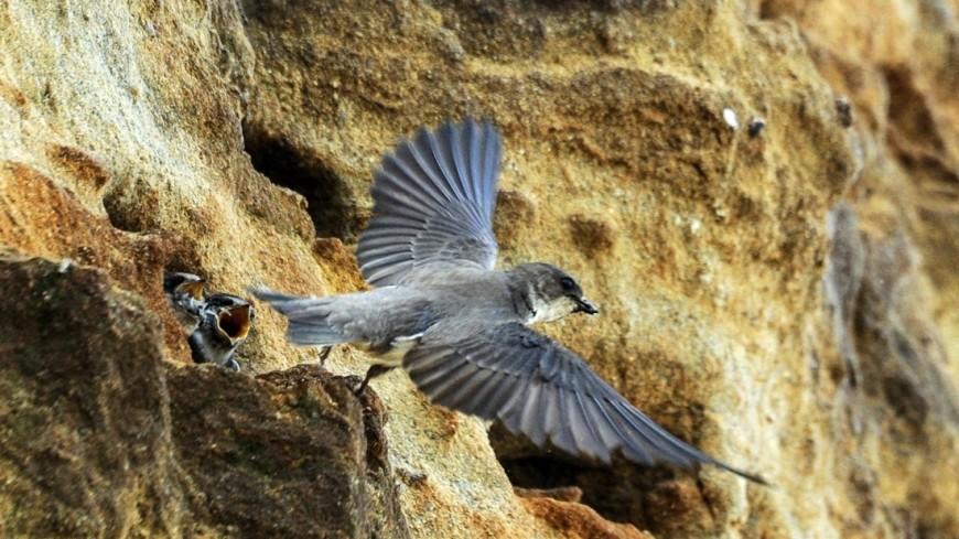 Загадки эволюции: перья появились на 80 миллионов лет раньше птиц
