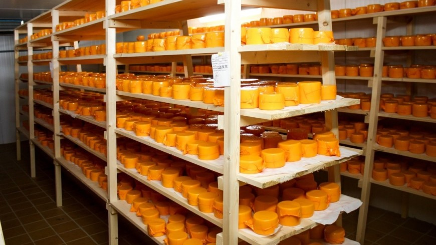 «Липовые» деликатесы: на Ставрополье изъяли 50 тонн контрафактного сыра