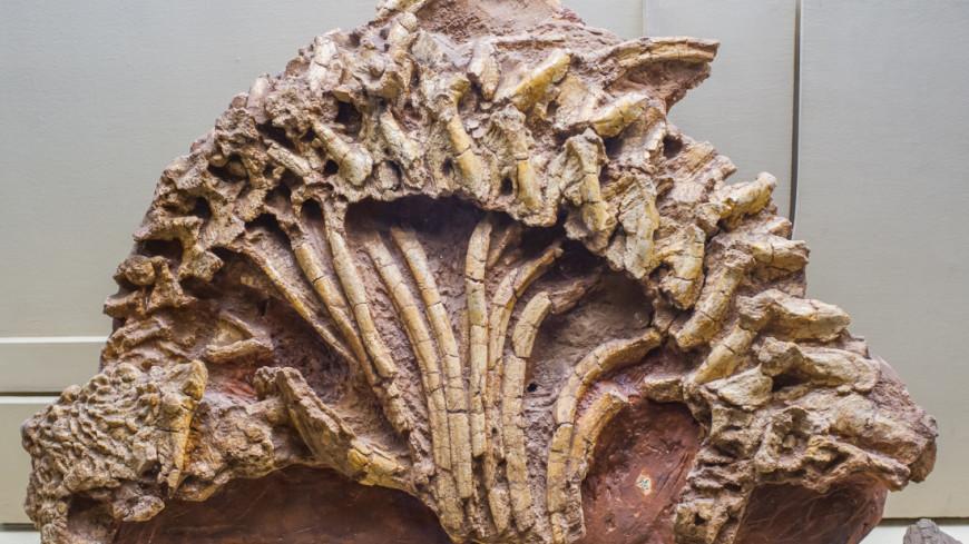 В Австралии нашли останки морского хищника, жившего 500 млн лет назад