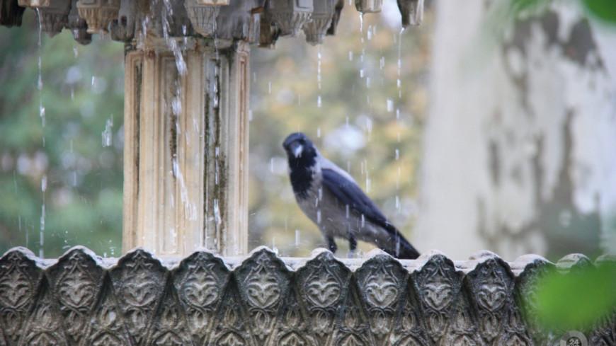 Ворона, ворона купается в фонтане, птица, птицы, ворона