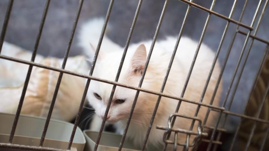Мини-гостиница «Кошачий ковчег» и приют «Кошкин Дом»,кошка, кот, кошачий приют, клетка, Кошачий ковчег, кошкин дом, ,кошка, кот, кошачий приют, клетка, Кошачий ковчег, кошкин дом,