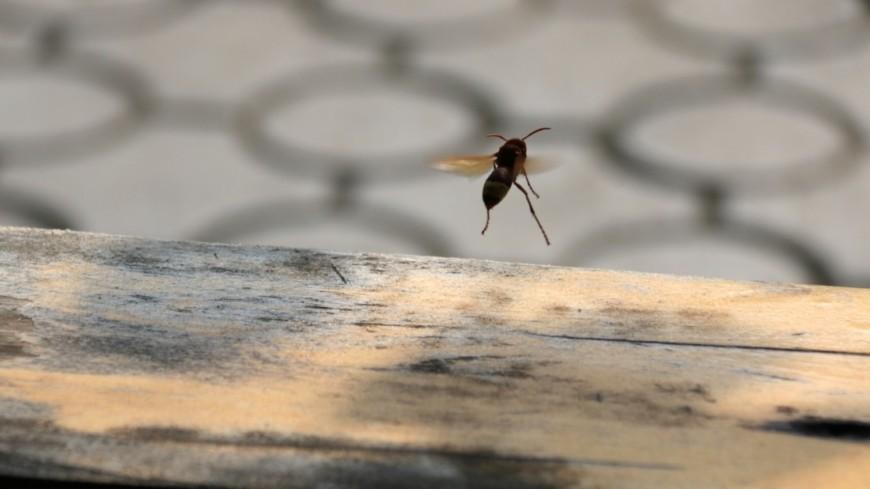 Создана первая настоящая киберпчела, которая может летать