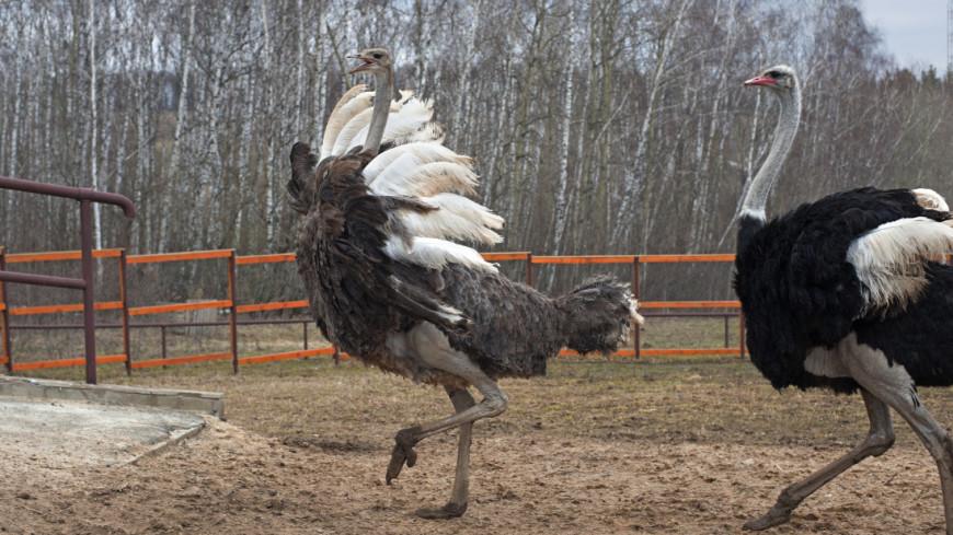 Древние птицы Восточной Европы оказались в три раза крупнее страусов