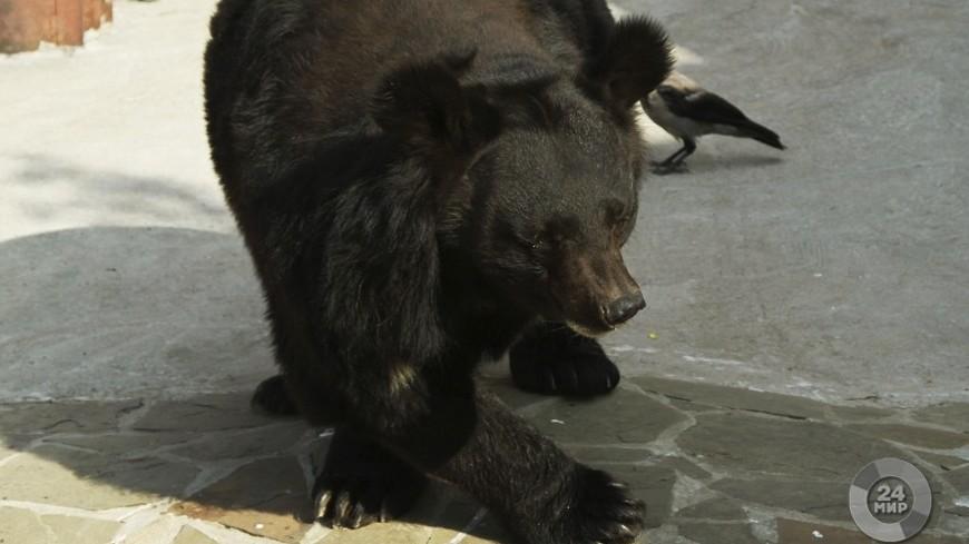 Медведей из Кишиневского зоопарка переселят в просторный вольер