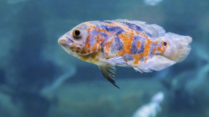 Пустеющий океан: ученые заявили о вымирании рыб из-за потепления