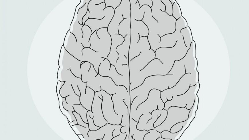 Лингвистические способности в мозгу занимают всего полтора мегабайта