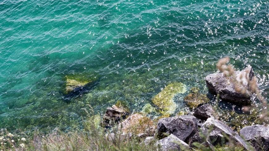 На побережье Калифорнии нашли гигантскую рыбу без хвоста и зубов