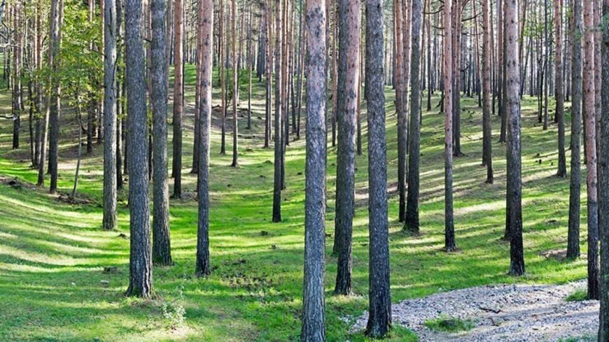"Фото: Петр Королев, ""«МИР 24»"":http://mir24.tv/, лес"