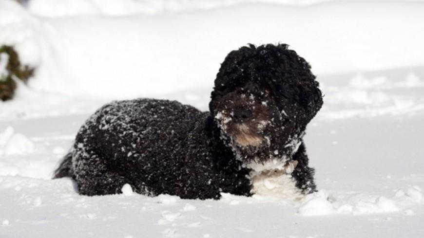 """Фото: Pete Souza, """"Белый Дом США"""":http://whitehouse.gov, щенок, снег, снегопад, собака, зима"""