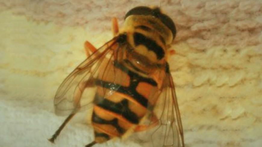 Роботы помогли пчелам и рыбам найти общий язык
