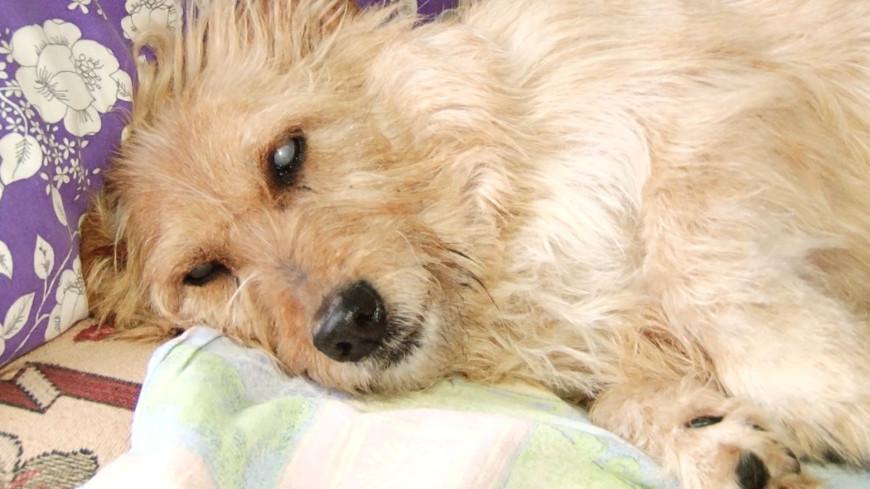 Слепая собака вернулась к хозяйке через три месяца скитаний