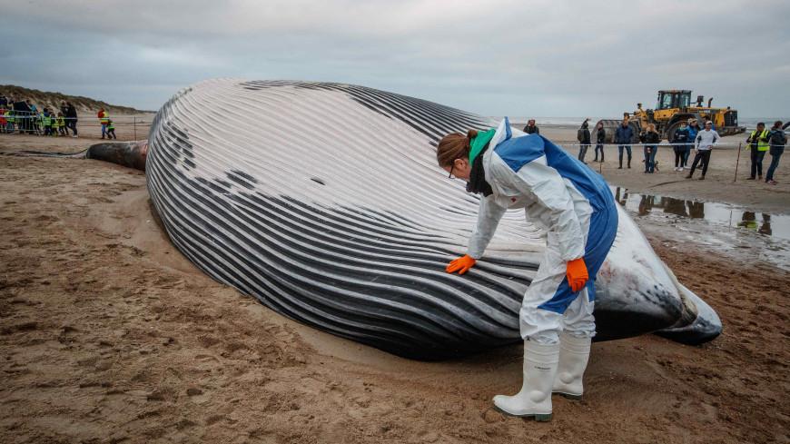 Пакеты и мешки: в желудке мертвого кита нашли 40 кг пластикового мусора
