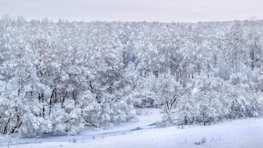 Зима (снег, сугроб, холод, мороз, лес, природа, деревья, парк)