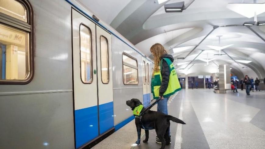 В 2019 году московское метро обучит 50 собак-проводников