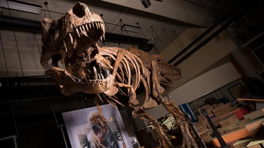 Длина канадского тираннозавра Скотти поразила ученых