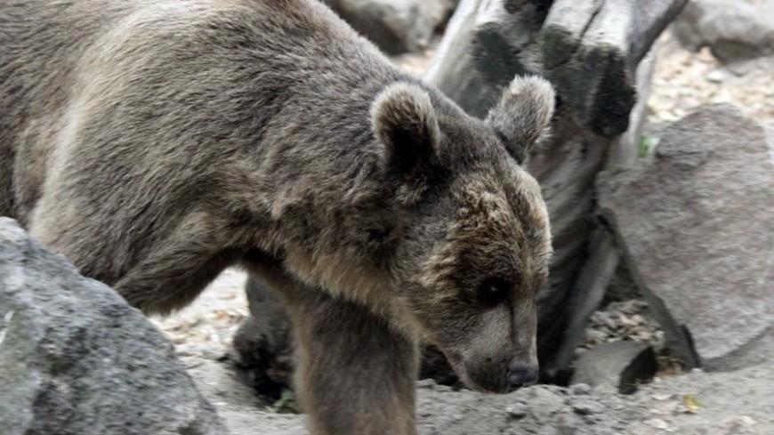 """Фото: Александр Попов, """"«МИР 24»"""":http://mir24.tv/, животные, зоопарк, медведь"""