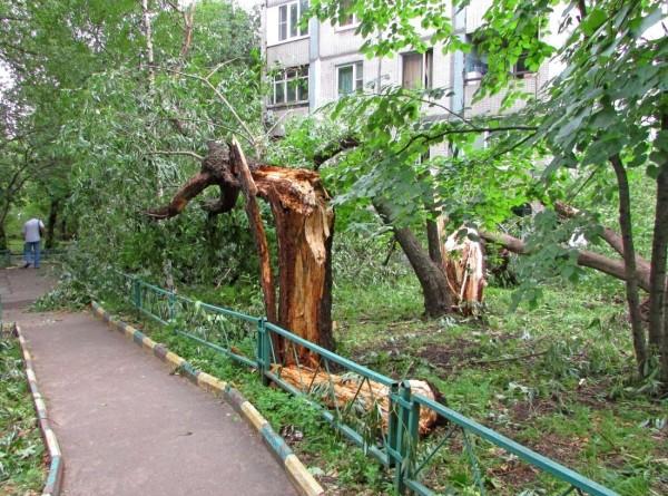 Ураган в Красноярске: повалены десятки деревьев