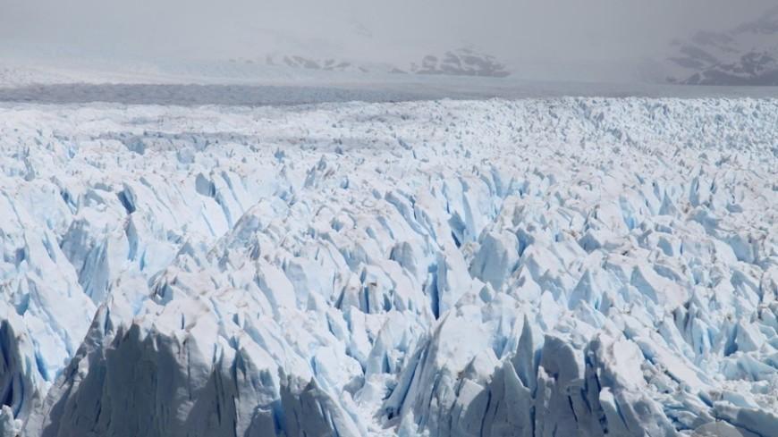 Гигантские бобры Ледникового периода вымерли от голода