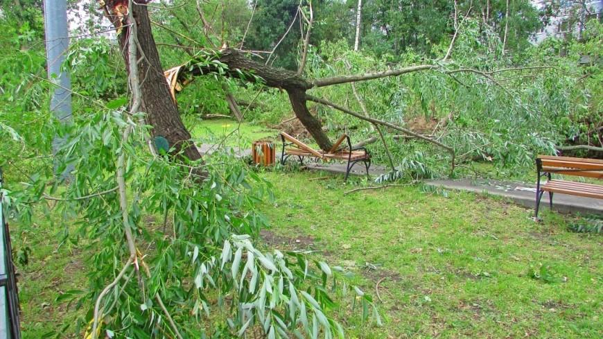 "Фото: Марина Дыкун (МТРК «Мир») ""«Мир 24»"":http://mir24.tv/, гроза, упало дерево, дерево, ураган, шторм, ветер, машина, ливень, дождь"