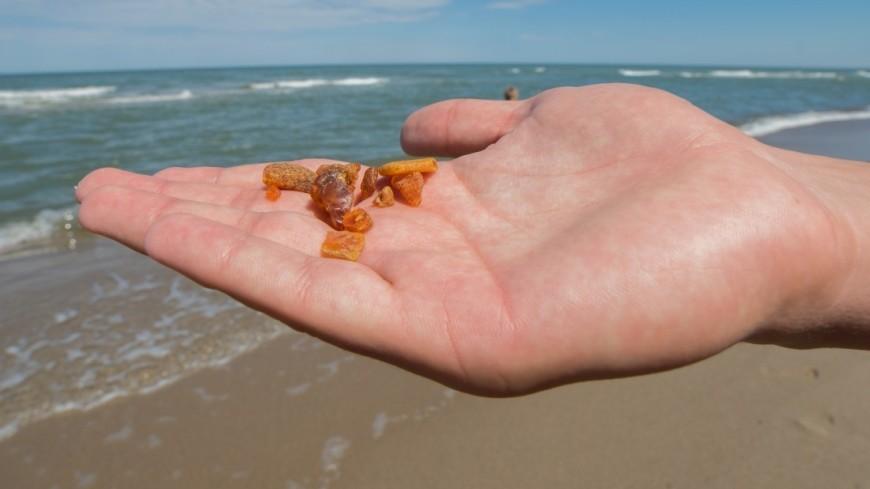 В янтаре из Мьянмы впервые нашли древних морских существ