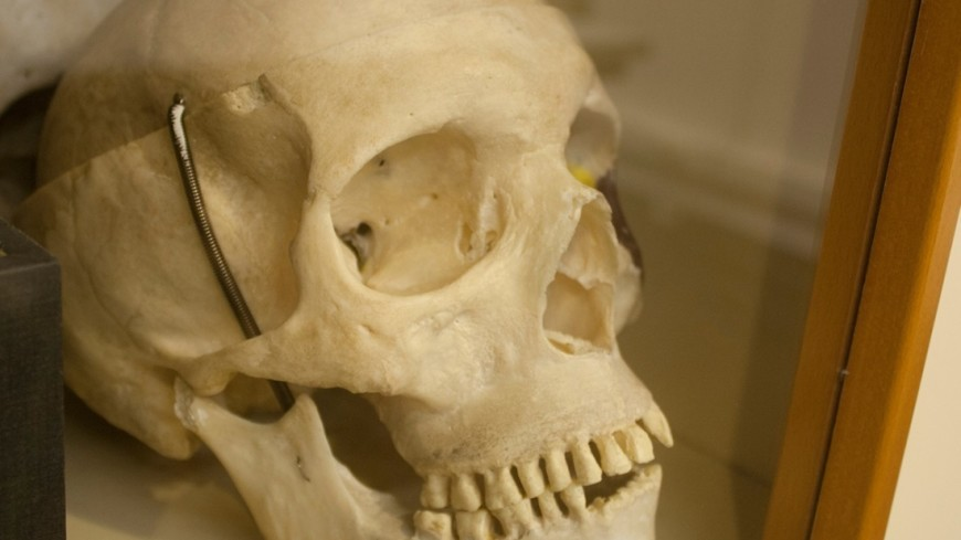 Неандертальцы могли вымереть из-за бесплодия