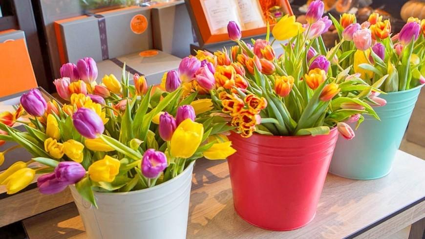 В Петербурге стартует фестиваль тюльпанов