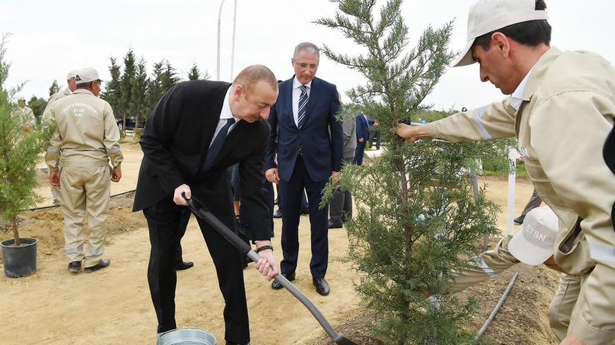 В Азербайджане высадили деревья в честь Гейдара Алиева