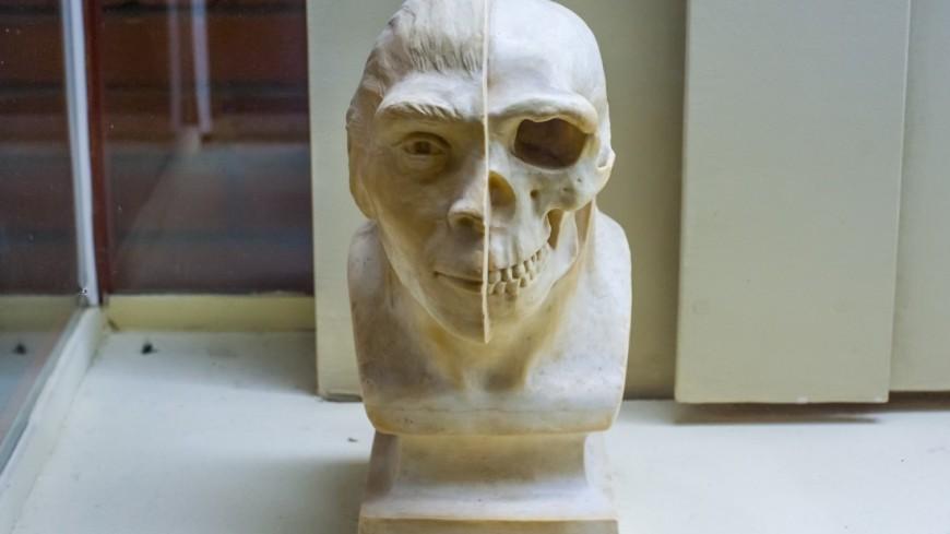 Люди придерживались сбалансированной диеты уже 120 тысяч лет назад