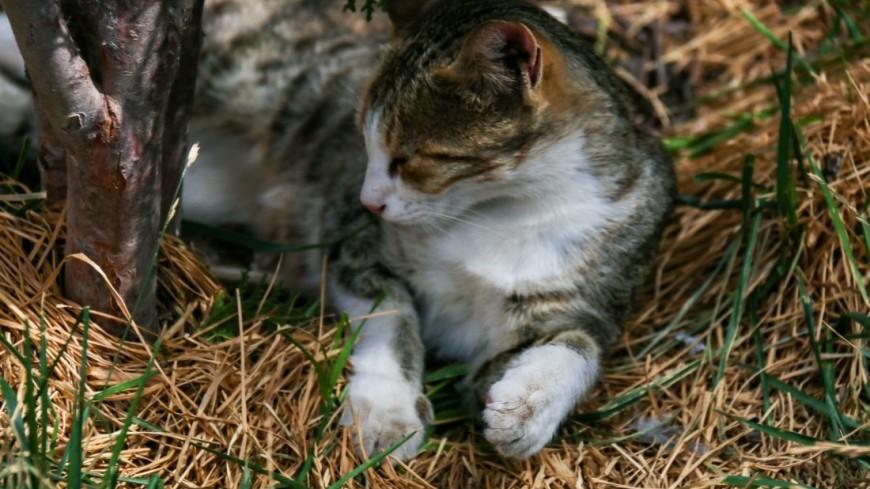 армения, кот, кошка