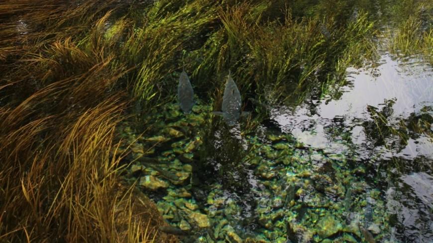 Крупнейшие реки по всему миру загрязнены опасными веществами