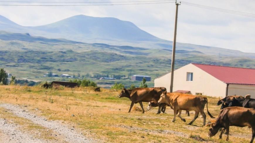 В поисках национального колорита: развитие туризма в Армении